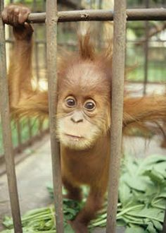 Say No to Palm OIL!!!!