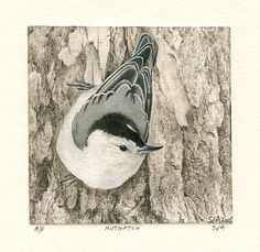 "Nuthatch by Sue deLearie Adair  ~ 4"" x 4"""