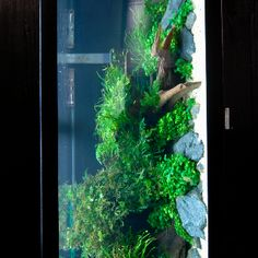 Garden In An Aquarium. Aquarium Garden, Aquariums, Tanked Aquariums, Fish  Tanks