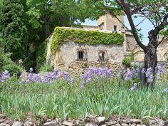 provenza  iris   Lourmarin  provence by provenza, via Flickr