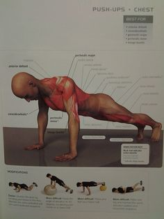 muscle diagram - CHEST: push-up(anterior deltoid, pectoralis major & minor, triceps brachii, coracobrachialis)