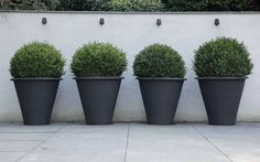 charcoal grey pots and green topiary against a white all - FABULOUS!