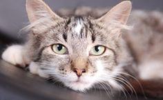 Cat Symptom Checker  http://www.petmd.com/cat/cat-symptom-checker?roi=echo3-18306302438-16759797-ffa65ae9ee06bb9157d965af2365721d&utm_source=Newsletter&utm_medium=Email&utm_content=123013Party_NYE-NWS&utm_campaign=NWS