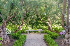 In the garden of the Pacific Palisades home, a pebble path leads to a concrete bench, ideal for contemplation. Manzanillo olive trees, Japanese boxwood, hydrangeas and fern pine hedges surround the space. Photo by Grey Crawford