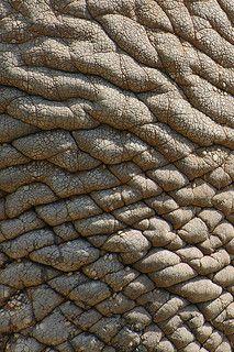 Elephant Skin.