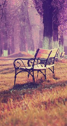 FreeiOS8 | md16-wallpaper-fall-blue-park-chair-lonely-nature