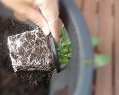Hang A Garden Demo gardening
