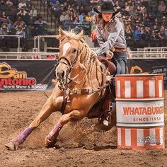 How about a appreciation post? We admire this so much, and love watching her do her thing. She's already accomplished so much, and she's just getting started! Barrel Racing Tips, Barrel Racing Horses, Barrel Horse, Cowgirl Pictures, Horse Pictures, Horse Girl Photography, Equine Photography, Cute Horses, Beautiful Horses