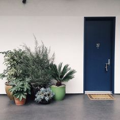 great idea for front door. all the plants would work perfect since we're under a little overhang.