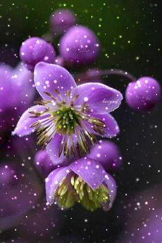 1250761.gif (320×480) Beautiful Rose Flowers, Flowers Gif, Animated Heart, Animated Gif, I Wallpaper, Flower Wallpaper, Gif Lovers, Gif Photo, Purple Roses