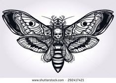 death's head moth tattoo - Google Search