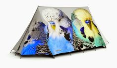 Grasslands Tent - Colorful Limited Edition Camping Tent designed by artist Jonathan Zawada. High Specification, Waterproof A-Frame Tent for 4 Season Use. Best Tents For Camping, Tent Camping, Monk Parakeet, 4 Season Tent, Luxury Tents, Budgies, Colorful Birds, Happy Campers, Bird Feathers