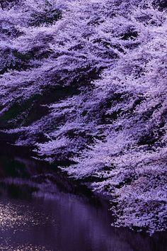 Visual Dose: June 2015 at Purple Love, All Things Purple, Shades Of Purple, Deep Purple, Pink Purple, Purple Stuff, Mauve, Yennefer Of Vengerberg, Purple Reign