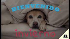 ☃Llegó el invierno☃ Hacé como BETO y subí el volumen! Es sólo cuestión de actitud yeaah!  #bienvenido #mascotasfelices #sumate