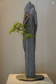 Bonsai clinging to rock