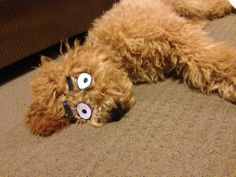 Put paper eyes and eyebrows on your sleeping dog to turn him/her into a cartoon :P