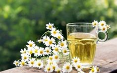 The healing benefits of the chamomile- A whole pharmacy in one single plant!FASHIONMG-STYLE | FASHIONMG-STYLE