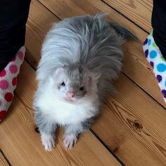 Ferret Clothes, Ferret Toys, Baby Ferrets, Funny Ferrets, Pet Ferret, Animals And Pets, Baby Animals, Funny Animals, Cute Animals