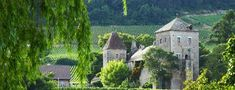 Zavařeniny 10x jinak   Články Albert Vineyard, Paris, Mansions, House Styles, Outdoor, Outdoors, Montmartre Paris, Manor Houses, Vine Yard
