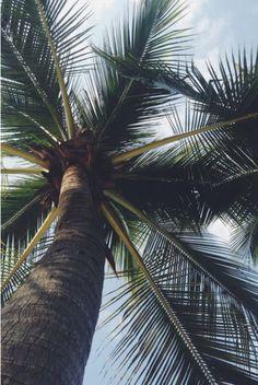 hawaii aesthetic palm trees   digital nomad life