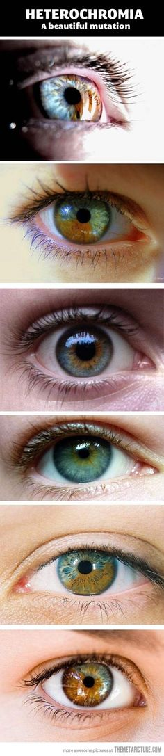Heterochromia - a beautiful mutation of the iris.I had no idea that it was a mutation. My eyes are dark green near the pupil and the iris fades out to a blue but the change color with my mood or what i wear. Pretty Eyes, Cool Eyes, Beautiful Eyes Color, Lovely Eyes, Simply Beautiful, Beautiful Things, Beautiful People, Foto Macro, Human Eye