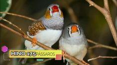 Hino 175 (Lindos pássaros livres) - YouTube