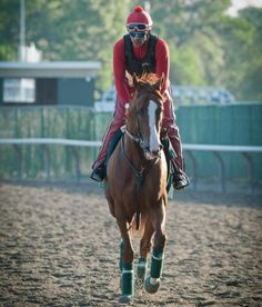Kentucky Derby and Preakness Stakes winner, California Chrome Horse Photos, Horse Pictures, The Belmont Stakes, Derby Time, Derby Horse, Preakness Stakes, Triple Crown Winners, Most Beautiful Horses, Sport Of Kings