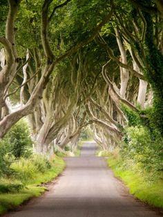THE DARK HEDGES (IRLANDA DEL NORD) – Un sentiero incantato, dove i rami degli alberi prendono vita e sembrano sul punto di avvolgerti. Bisogna andare nei pressi di Bregagh Road per vedere questo incantevole bosco fitto e sentirsi come in una favola in stile fantasy