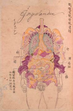"""From: """"Selection of old anatomical illustrations that provide a unique perspective on the evolution of medical knowledge in Japan during the Edo period (1603-1868)."""" Seyakuin Kainan Taizōzu (circa 1798)"""