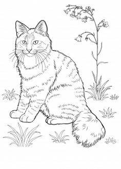 Planse Desene De Colorat Pisica 3 Gif 1590 2094 Coloring Page 2