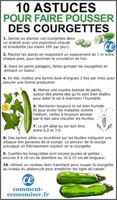 10 market gardening tips for growing beautiful zucchini