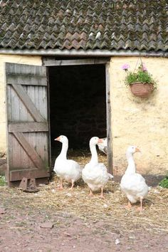 """Hi Ladies~tonight let's visit """"GooseHill Farms"""" pinning both inside and out."""