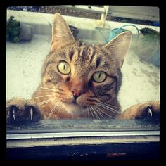 Cat. Let me in!