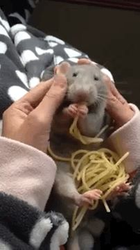 This rat carbing up on spaghetti is living his best life.