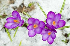 Winter Weather & Your Plants