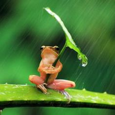 Penkdix Palme Member Profile -- National Geographic Your Shot