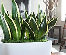 14 Best Houseplants for a Restful Sleep | Peace lily plant, Peace ...
