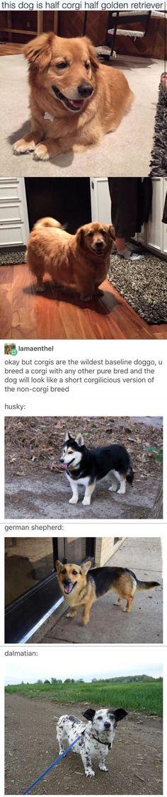 """A corgi leading a conga line of pugs on an adventure."""