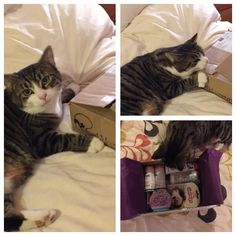 """Titch v excited over her first ever Cat Hampurr!"""
