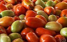 Jovens ganham dinheiro vendendo o tomate, fruto mais desejado da mesa brasileira