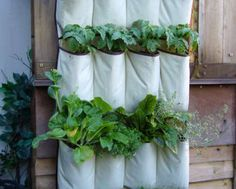 Shoe Organizer Garden... AMAZING Idea for my small backyard!
