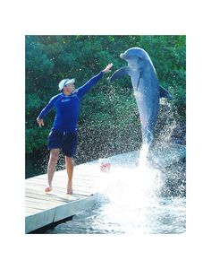 "Dolphin and trainer. ""Perseverancia"" / Delphinus Dolphin Cancun . Swim with Dolphins"