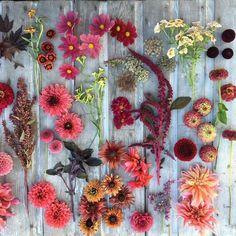 Erin Benzakein kvety 4