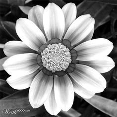 26 best pictures of flowers in black white images on pinterest black and white flowers mightylinksfo
