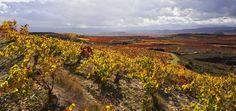 Vineyard at Elciego Elciego La Rioja Alavesa Basque Country Spain Rioja Spain, Hotel Villas, Basque Country, Vineyard, Outdoor, Outdoors, Vine Yard, Vineyard Vines, Outdoor Games