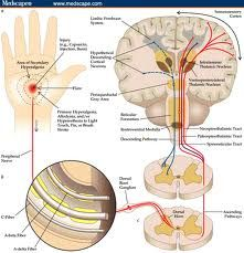 """What Is Central Sensitization? Central sensitization is a condition of the nervous system that is associated with the development and maintenance of chronic pain. When central sensitization occurs, the nervous system goes through a process called """"wind-up"""" and gets regulated in a persistent state of high reactivity. This persistent, or regulated, state of reactivity subsequently comes to maintain pain even after the initial injury might be healed."""