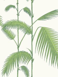 Buy Leaf Green on White, Cole & Son Palm Jungle Wallpaper from our Wallpaper range at John Lewis & Partners.