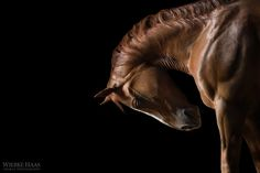 Fine Art Horse Photography by  Wiebke Haas http://www.mymodernmet.com/profiles/blogs/wiebke-haas-equine-photography