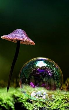 ::violet::hot pink::rainbow::bubbles::fungi::skinny stem::jet black::nature is so exotic::I love Photography Gallery, Nature Photography, Moonlight Photography, Slime Mould, Fotografia Macro, Blowing Bubbles, Mushroom Fungi, Psychedelic Art, Amazing Nature