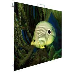 fish underwater wallpaper by Under The Water, Life Under The Sea, Eyes Wallpaper, Fish Wallpaper, Deep Sea Animals, Small Animals, Underwater Wallpaper, Mandarin Fish, Underwater Fish